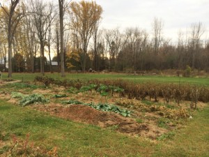 Leaves are gone and frost is frequent, but Rosslyn's veggie patch is no crying matter.