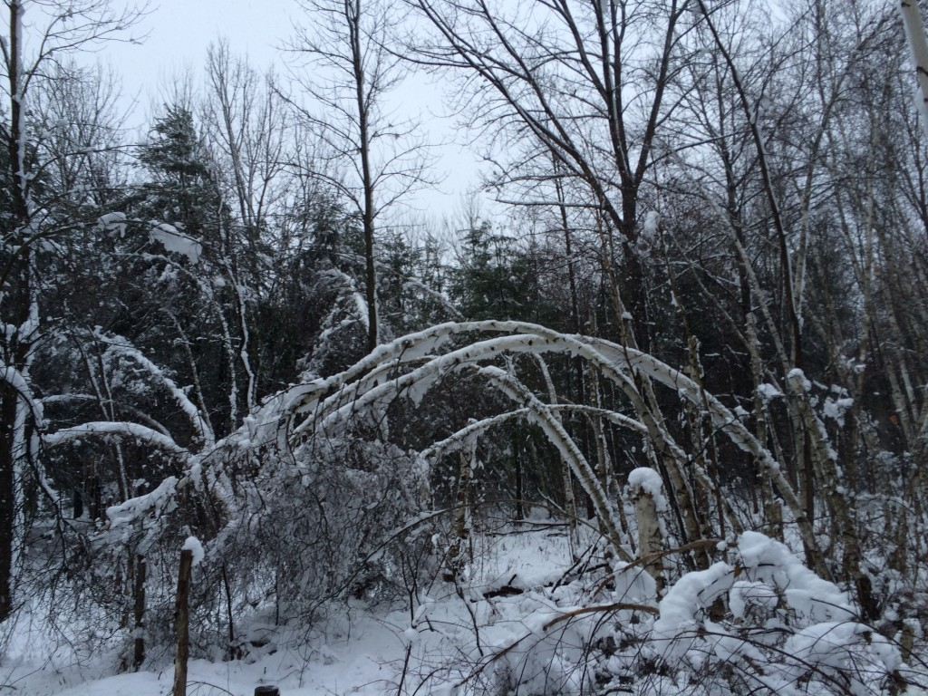 Winter storm damage throughout Rosslyn's woods and meadows.